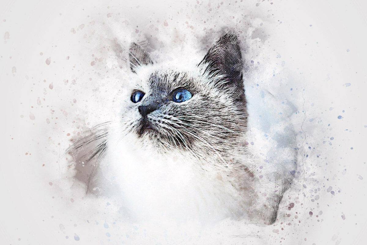 『吾輩は猫である』猫から見た人間の姿