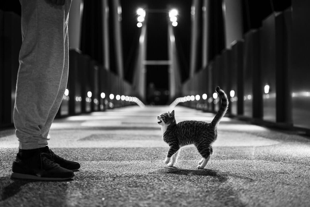 『吾輩は猫である』挑戦的な猫