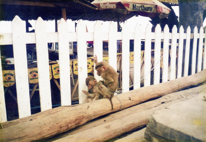 メコン川のほとりの猿の親子